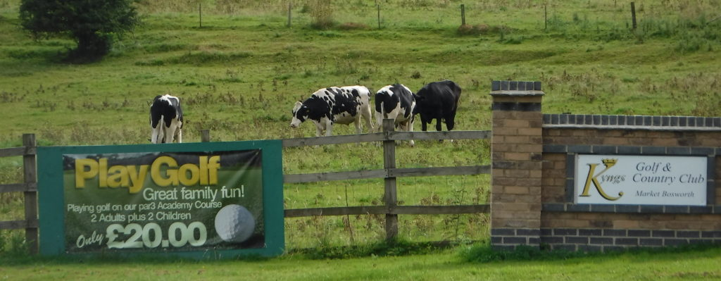 Cows playing golf