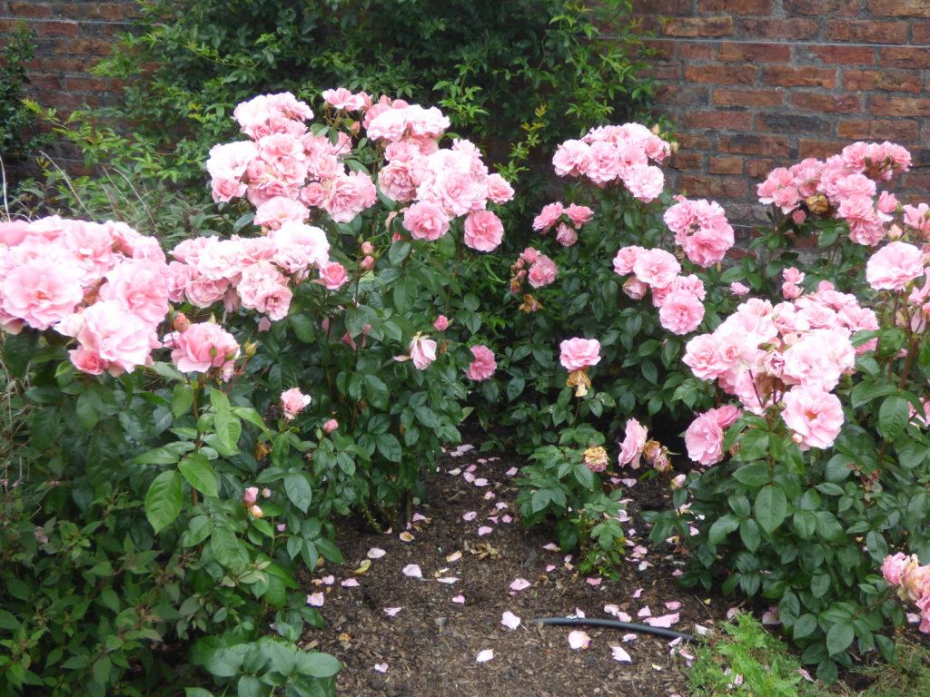 Dunham Massey Gardens
