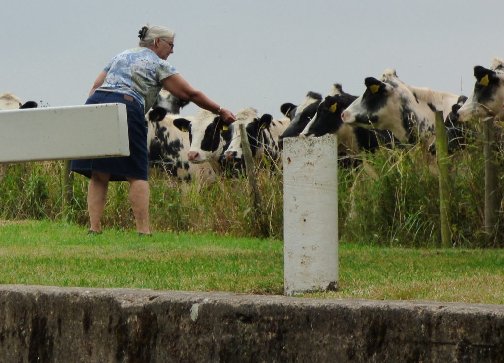 Paula and Cows