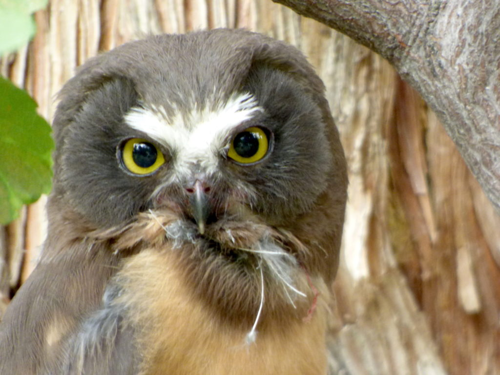 Owl Again
